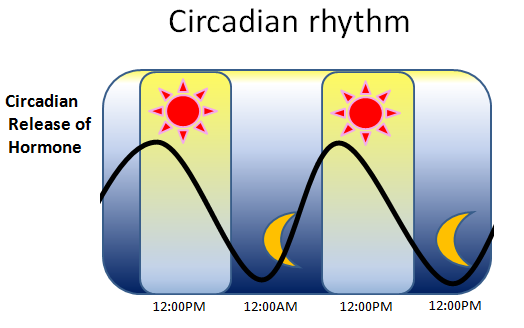 a description of an experiment to test the different circadian rhythms Ap® psychology 2013 scoring guidelines to earn this point the student must explain that the age differences in circadian rhythms experiment should test.